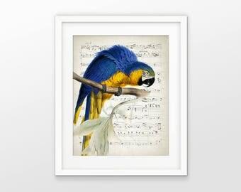 Macaw Art Print - Parrot Painting - Macaw Tropical Bird - Parrot Music Sheet Art - Amazon Rainforest - Single Pint #2400 - INSTANT DOWNLOAD