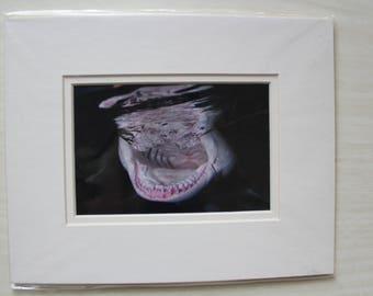 NIGHT LEMON - Original double matted photograph of lemon shark