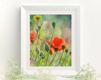 Digital download picture Poppy photography Printable picture Photo like painting Poppies wall decor Rustic wall art Cottage decor 8x10 print