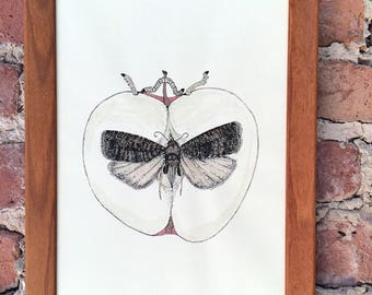 Morbid Moth Art Print codling moth with apple coat of arms ink drawing colorized watercolor painting