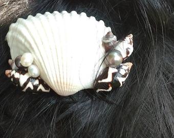 Natural Shell Hair Clip