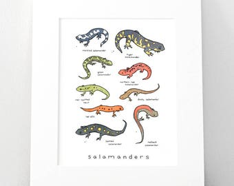 Salamanders Chart Print, Animal Wall Art 8x10