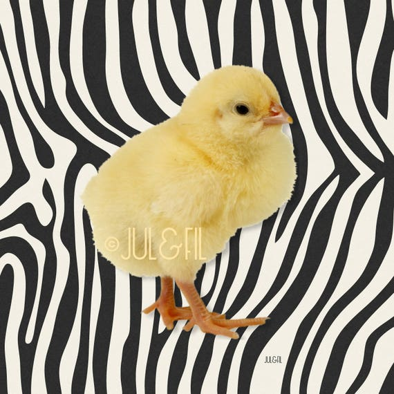 Image digital chick on printed Zebra juletfil ©