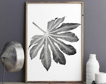 Leaf Art Print - Botanical Prints – Black and White Wall Art – Fine Art Print – Large Wall Art - Botanical Decor –Botanical Wall Art