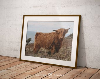Yak Photography, Yak Nursery Decor, Yak Wall Art, Digital Wall Art, Digital Print, Digital Download, Instant Download, Printable Photography