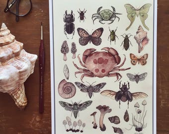 Natural History Specimens A4 Giclee Print