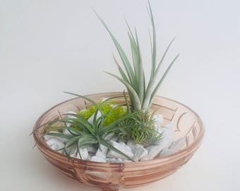 Vintage glass vessel with 3 Air Plants