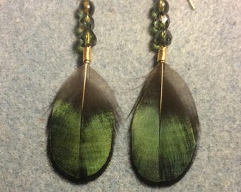 Irridescent Lady Amherst pheasant feather earrings adorned with green Czech glass beads.