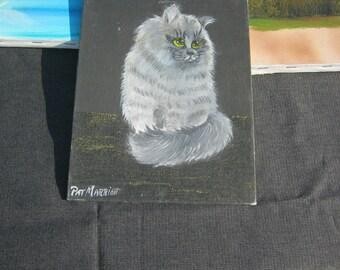 Fluffy white cat