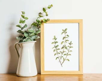 Oregano - Oregano painting - herb painting - oregano watercolor - home decor painting - kitchen art - dining room art - food art - herbs