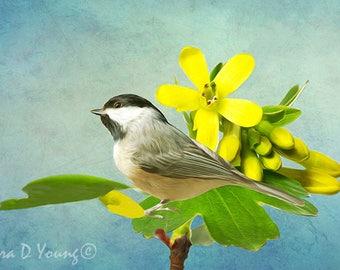 Bird Art Print, Carolina Chickadee, Chickadee Bird, Golden Currant, Bird on Flower, Flower Petals, Yellow and Green, Fine Art Photography
