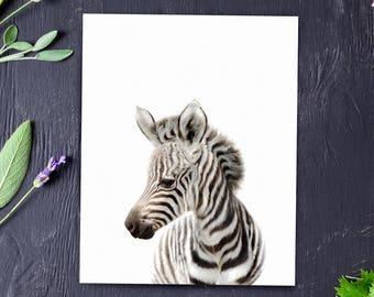 Safari nursery decor, Zebra print, PRINTABLE art, Safari animals wall art, Baby zebra, Safari theme, Nursery wall art, Baby animal prints
