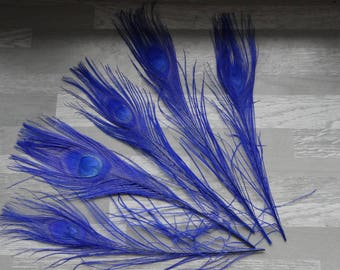 Set of 5 peacock feathers dyed Royal Blue