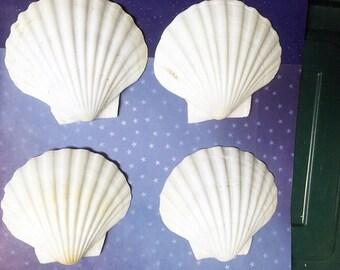 Set of 4 LARGE White English Scallop Shells Beach Wedding Shells White Seashells - 4 1/2 inches - Mermaid Shells