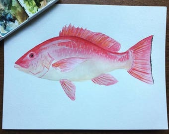 Watercolor Red Snapper