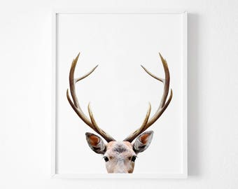 Deer Antlers, Deer Print, Nursery Decor, Gift,Home Decor, Woodland Nursery, Animal Print, Deer Poster, Deer Head, Woodland Animals