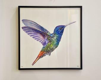 Hummingbird watercolour, art reproduction