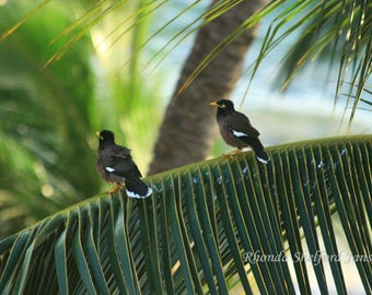 A perfect View: bird pictures, bird prints, bird photography,  palm tree pictures, bird wall art, bird decor,Hawaii pictures,Hawaii wall art