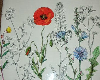Wild Flowers Botanic Drawings SALE