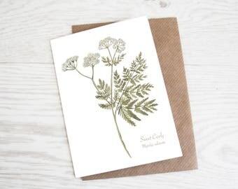 Sweet Cicely, Botanical Wildflower Print, Greeting Card