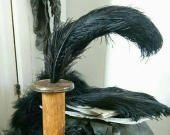Vintage ostrich feathers. Black ostrich plumes. Hat making. Milinary feathers. Display.