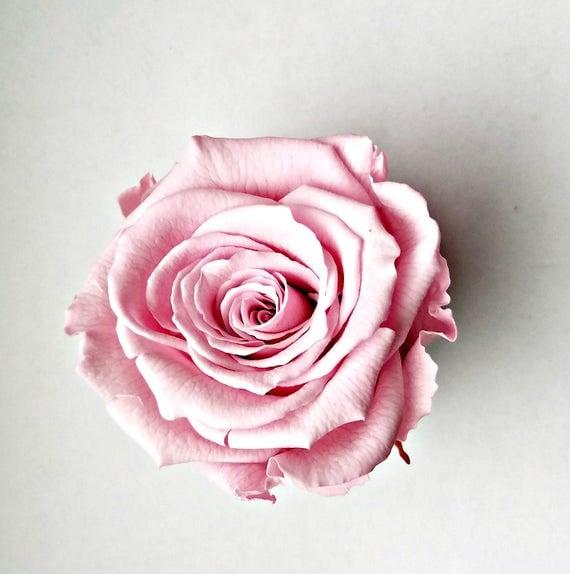 Preserved rose 6 pack, pink rose, Rose, Everlasting rose, Forever rose, wedding rose, engagement rose, wholesale rose, rose sale