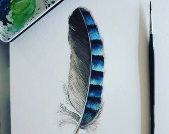 Watercolor of Jay feather
