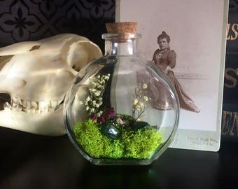 Victorian Green Beetle Terrarium Glass Bottle Display, Gothic Decor, Curios Cabinet, Altar, Oddity, Real Beetle