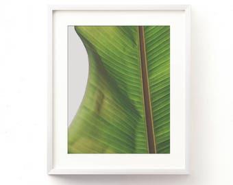 tropical art print, green home decor, banana leaf print, leaf photograph, modern decor, banana leaves art, tropical photography, printable