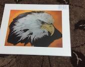 Bald Eagle- Museum qualit...