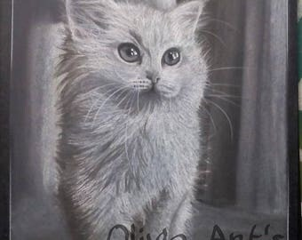 Little gray kitten with pastel pencils