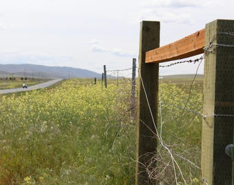 Fences and wildflowers