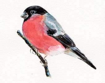 "Bullfinch 12"" x 10"" Original watercolour painting"
