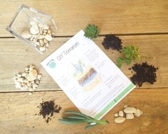 DIY Terrarium Kit, Small Glass Square Succulent Terrarium, Miniature Garden, Glass, Living Succulent Green Gift, Indoor Garden, Baby Cubic