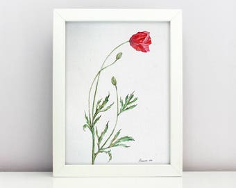 Poppy  Flower Watercolor ORIGINAL painting  Botanical Watercolor  Painting poppies  Wall Art  Red Poppy Flower