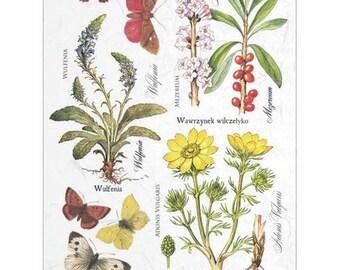 1 sheet of rice paper 21 x 28 cm decoupage collage Botanical Flower 406