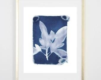 Blue Botanical Cyanotype 3 PRINT / Handmade Art Print / Original Botanical Floral Cyanotype Photogram Art / indigo/  8x10