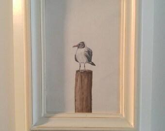 Seagull Art: color pencil seagull