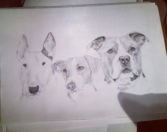 multiple animal portrait