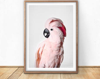 Pink Cockatoo Print, Cockatoo Bird, Digital Download, Gallah Wall Art, Exotic Bird Photo, Tropical Print, Pink Wall Art, Jungle Themed Decor