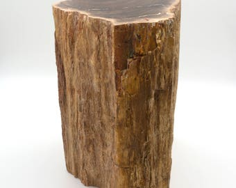 Permian petrified wood trunk from Paraguay - 15 x 14 x 20 cm - Weight: 7 kg.