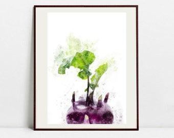 Kohlrabi Watercolor Art Print, Kohlrabi Illustration, Kitchen Wall art, Kitchen Wall Decor, Vegetable Print