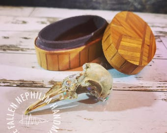 Crystal Geode Style Partial Bird Skull in a Vintage Handmade Oval Wooden Box, Macabre Oddities, Curio Oddity