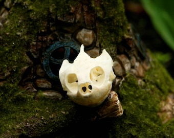 Real Red Eared Slider Turtle Skull