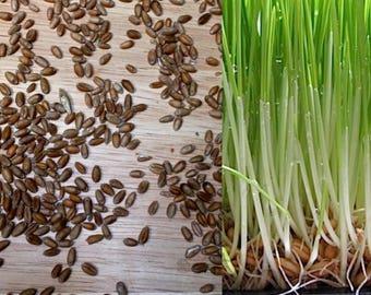 Wheatgrass Seeds Pet Grass