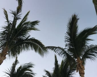 fronds at dusk