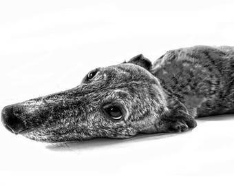A4 Greyhound Print
