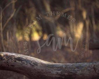 Autumn Woods Digital backdrops, digital background, Dreamy background, Forest background, Forest backdrop, Autumn backdrop background