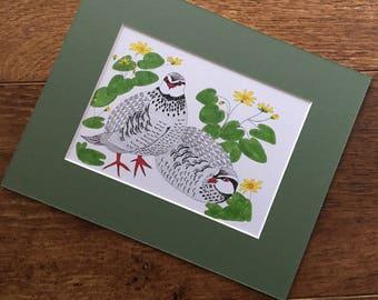 """Original art- """"Red Legged Partridges in the lesser celandine"""""""