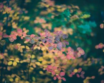 Autumn leaves photography, Yellow leaves photo print, Botanical decor, Nature photography, Fine Art print, Modern rustic decor, Garden decor